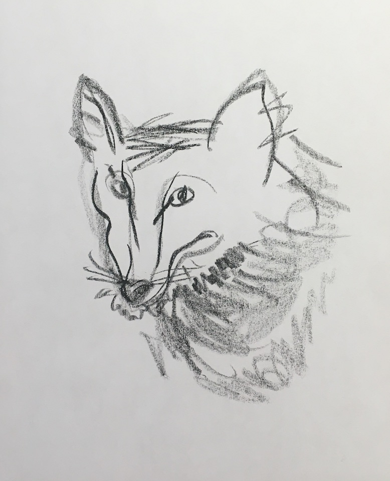 coyote for blog