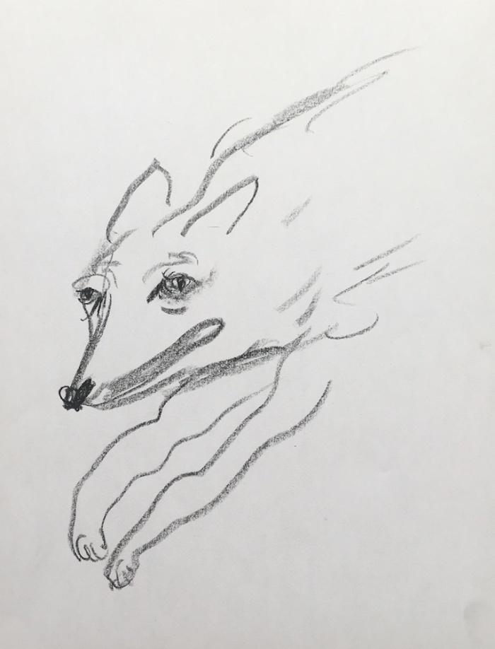 coyote running for blog